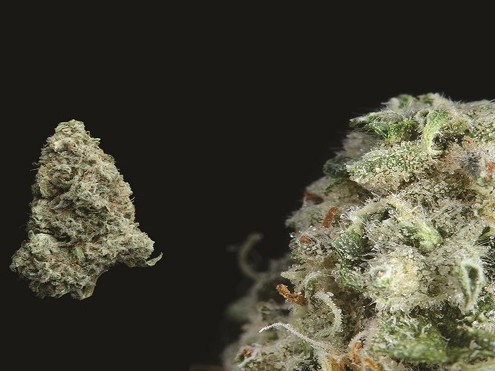 Best Weed Strains To Smoke Right Now | Complex