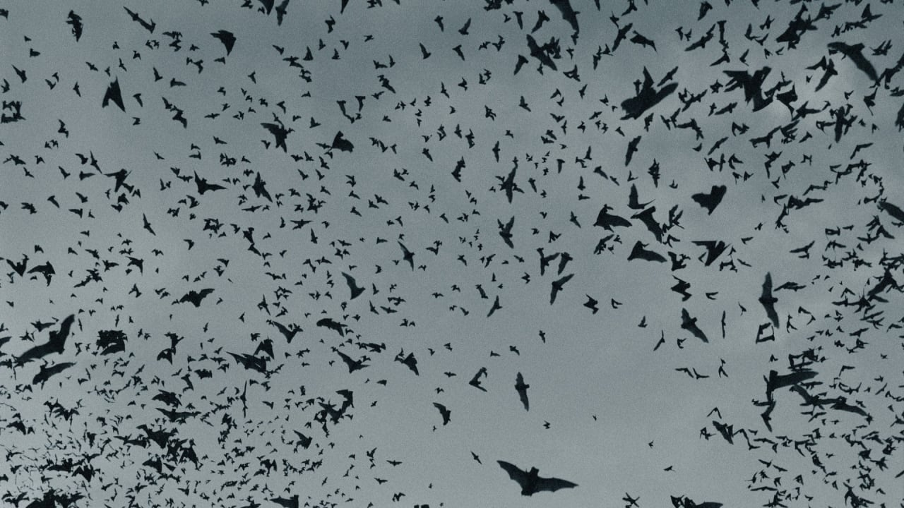 complex.com - Trace Cowen - Viral Photo of 'Human-Sized' Bat Resurfaces and People Are Fact-Checking It
