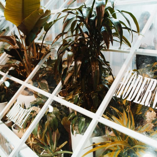 Modernica's greenhouse 📷: @Instabaeth