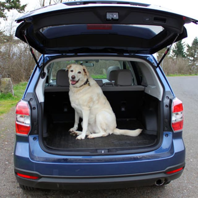 Dog Friendly Cars  Australia