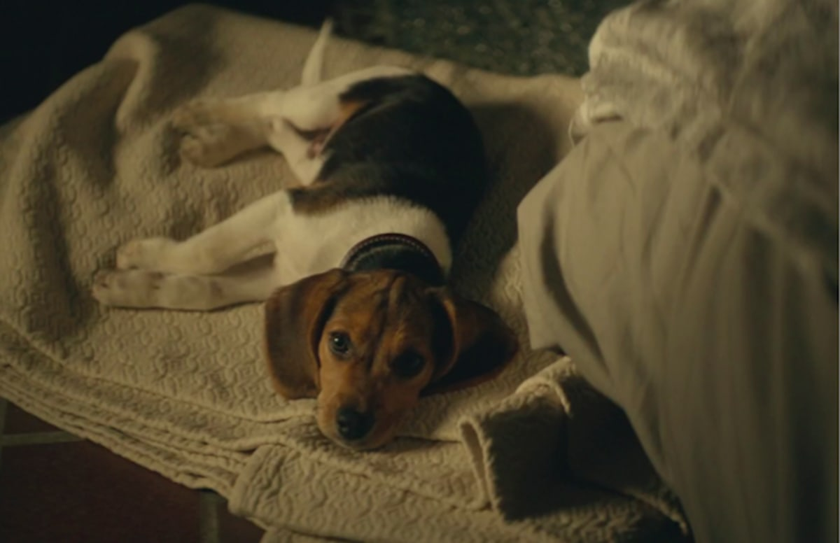 Dog From John Wick