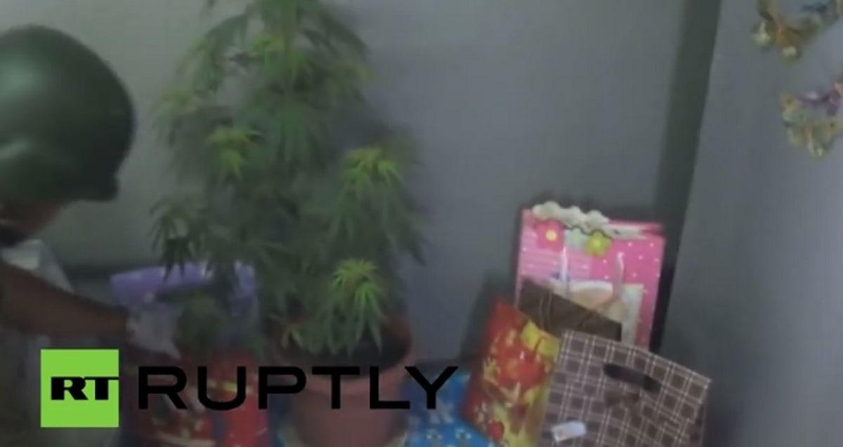 Woman Who Used Marijuana Plant As Christmas Tree Arrested