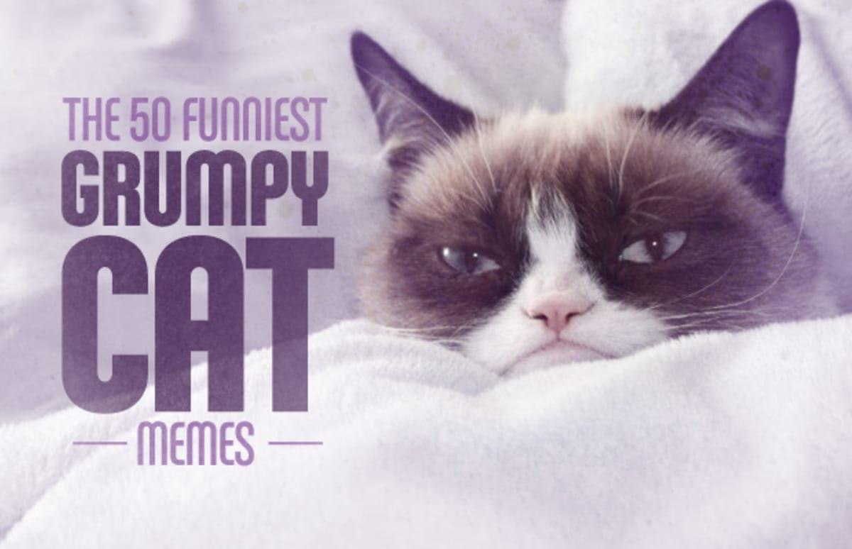Funny Cat Memes: The 50 Funniest Grumpy Cat Memes