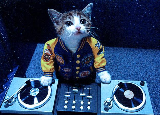 dj-cat-li