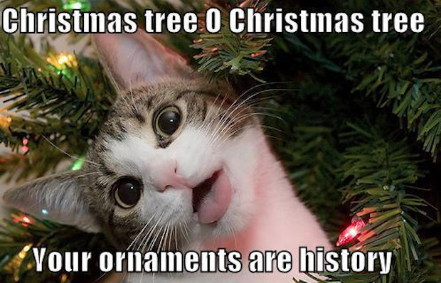 Countdown To Christmas Meme.25 Hilarious Christmas Memes Complex