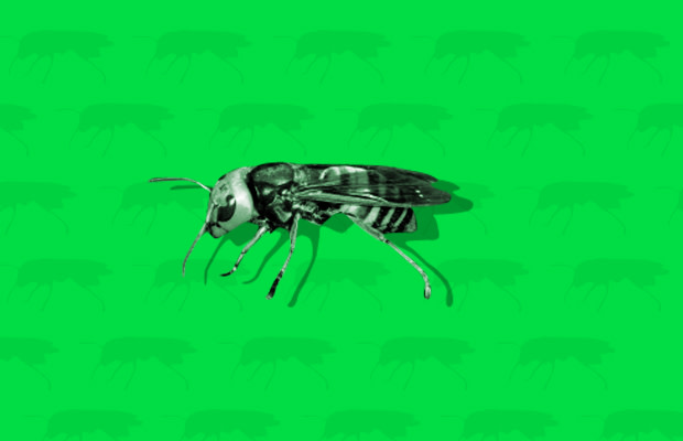 The Most Deadly Insects in the World   Complex