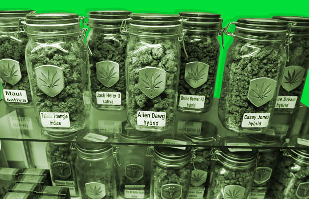 Denver botanical a kush connoisseur 39 s guide to denver 39 s for Guide culture cannabis interieur