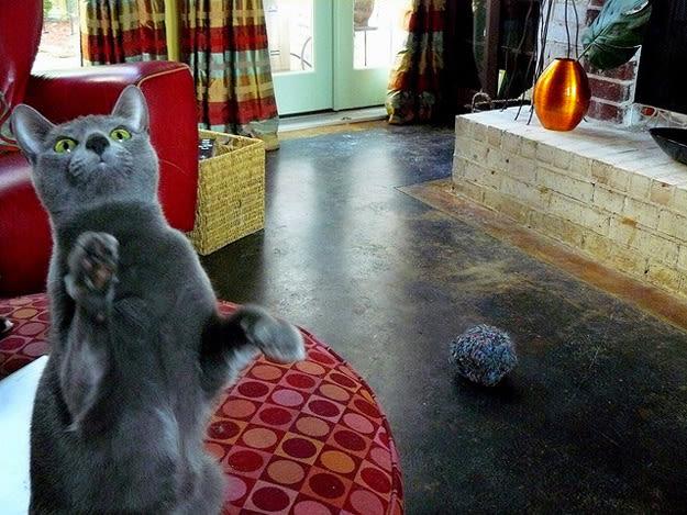 cat-dance-li