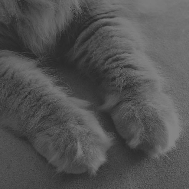cashmere-cat-diplo-friends