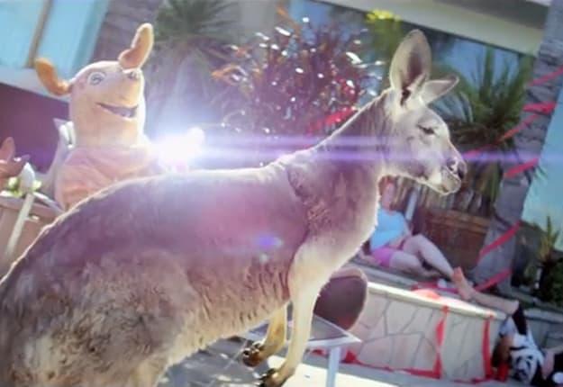 sb-kangaroo-hello-vid