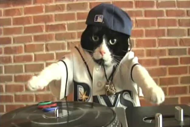 tampa-rays-dj-cat