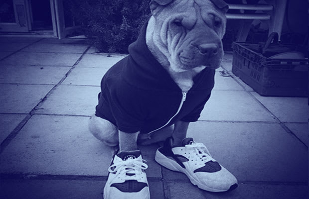 best cheap 16170 70ea7 25 Pictures Of Dogs Wearing Better Sneakers Than You