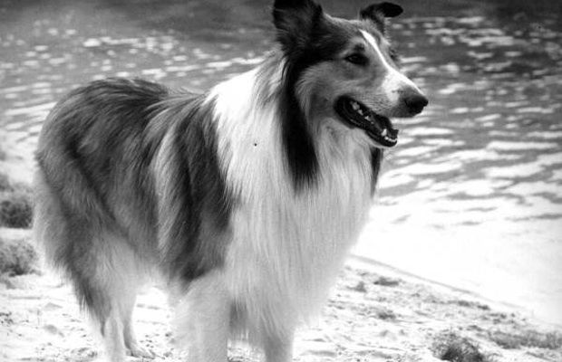 Lassie - Max read into it review