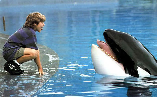 whale in free willy  »  9 Photo » Creative..!