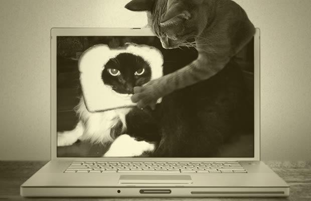 kdayqhr7h3zj9cws2bvl jpgFunniest Cat Memes