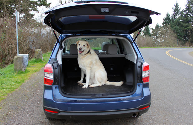 subaru outback   cars  dog lovers complex
