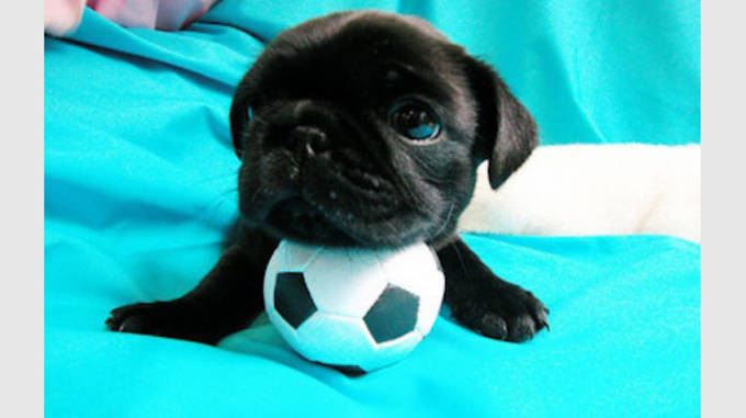 Puppy4 copy