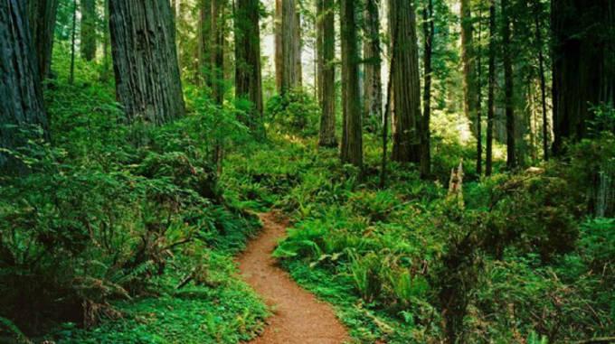 Image via Redwoods