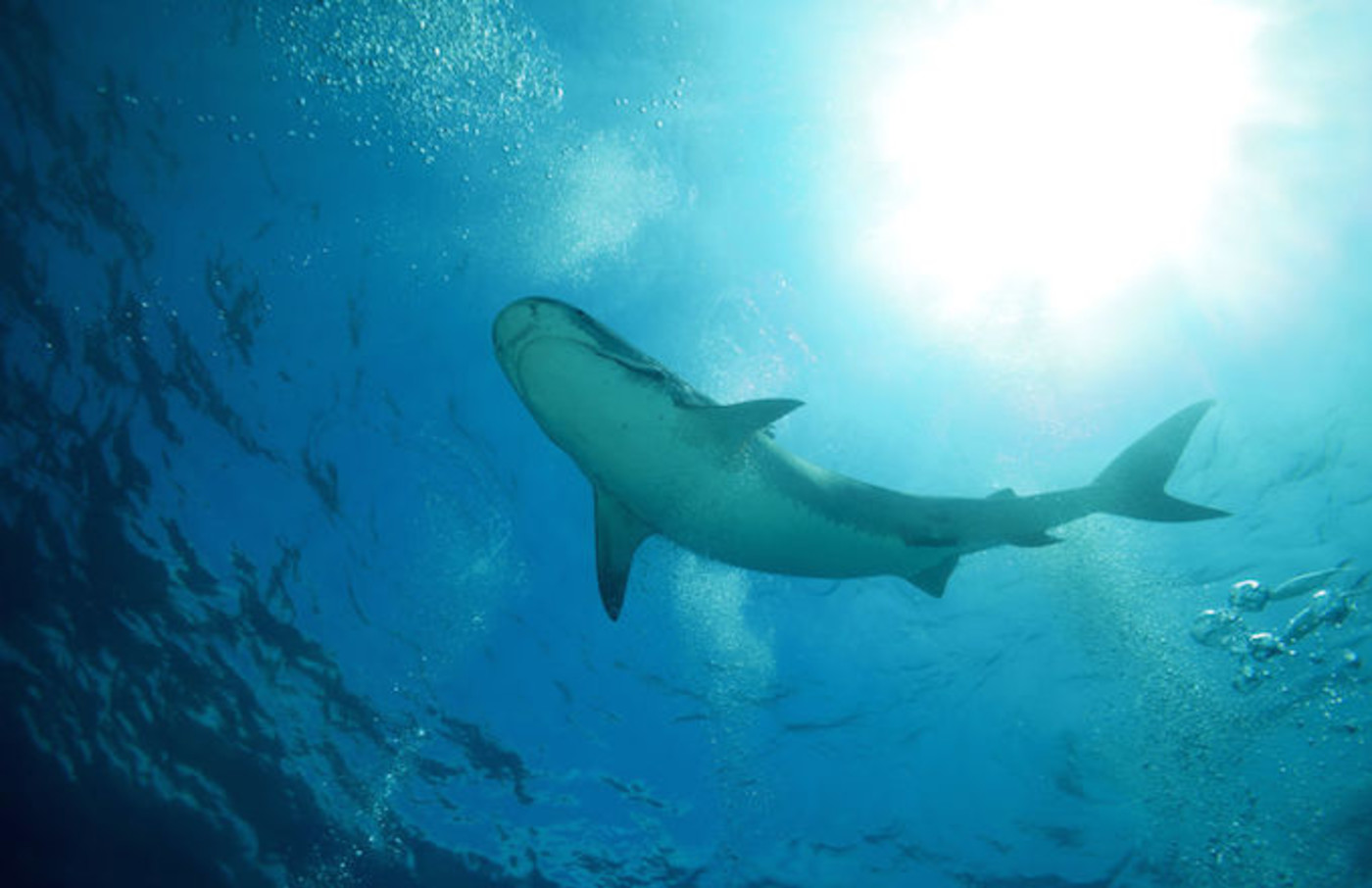 Shark theft