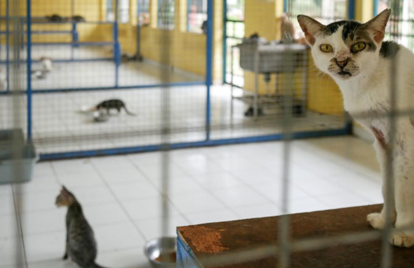 Quarantined cats in Jakarta await adoption