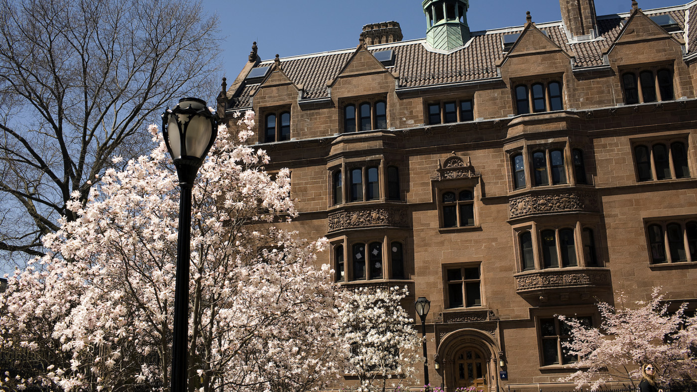Trees bloom on the campus of Yale University.