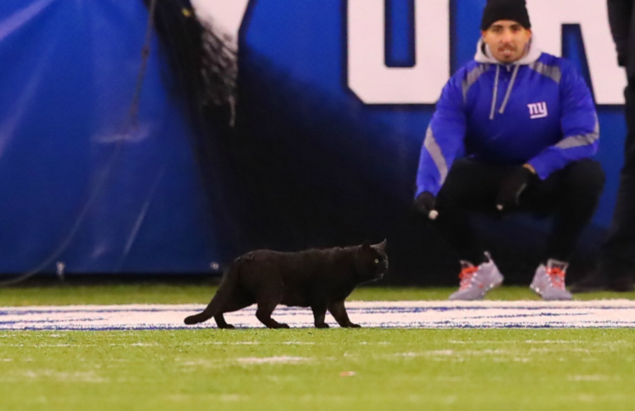 A Black Cat runs onto the field during the second quarter