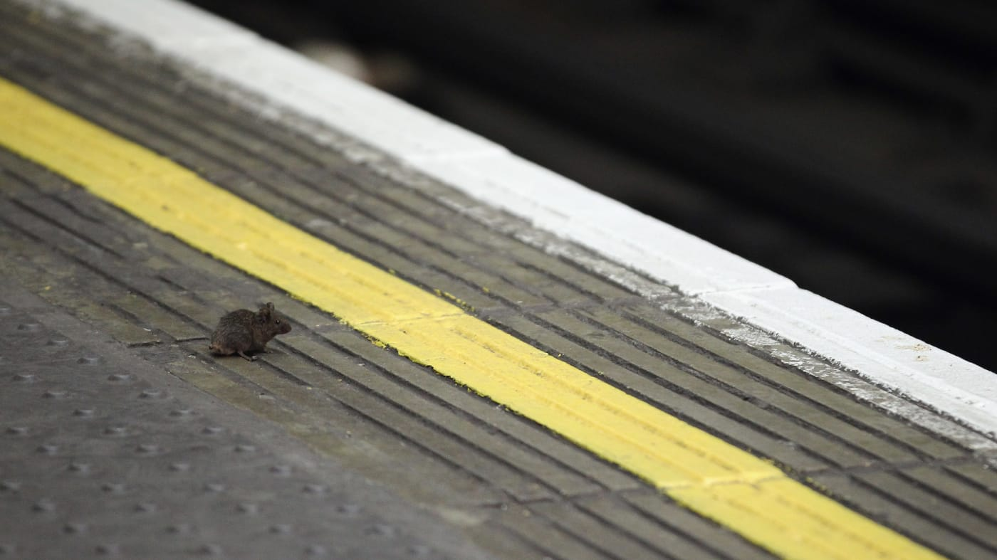 mouse subway