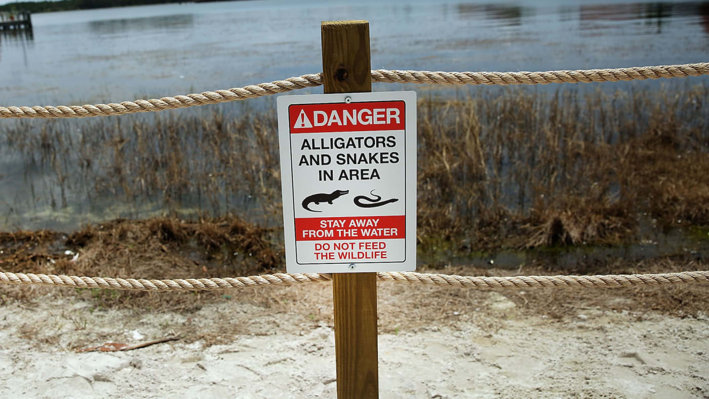 Newly installed signs warn of alligators and snakes