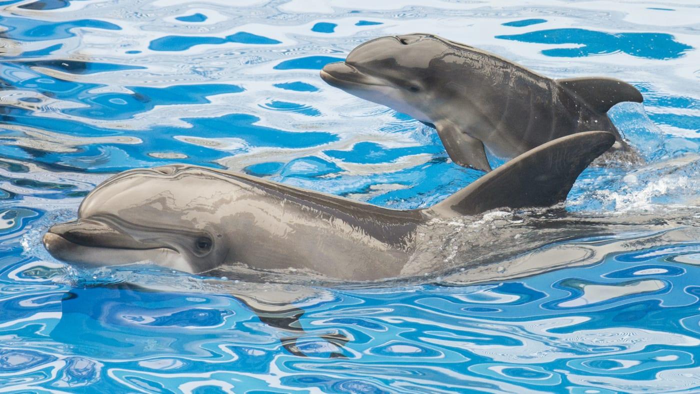 dolphins climatechange