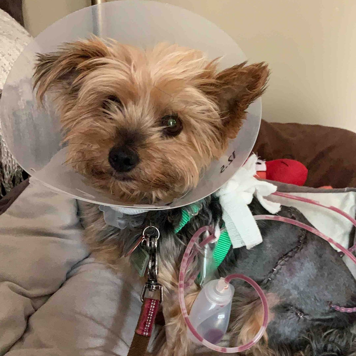 Toronto Dog Hurt After Saving 10-Year-Old From Coyote Attack | Complex CA
