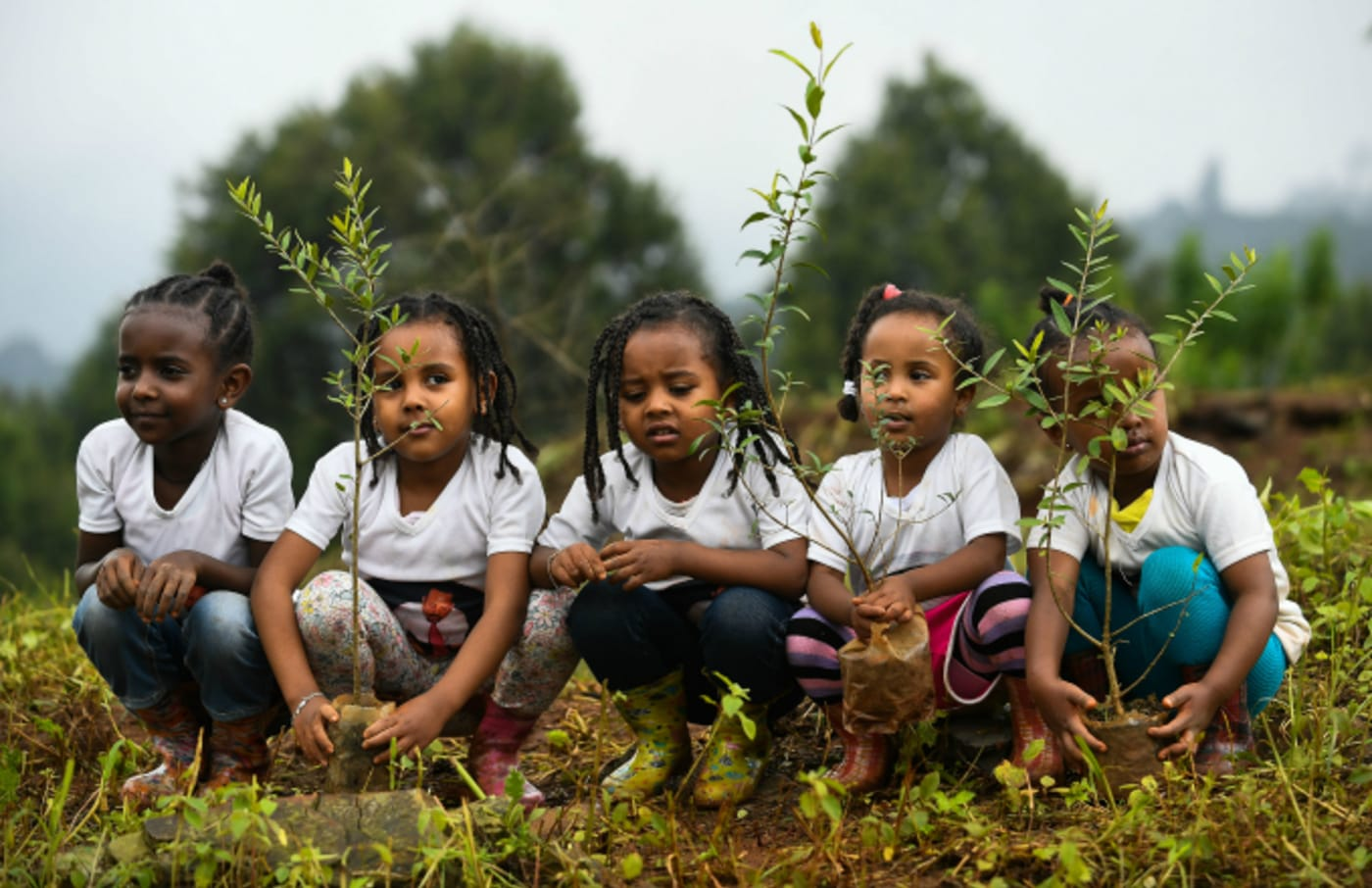 Young ethiopian girls take part in a national tree planting drive