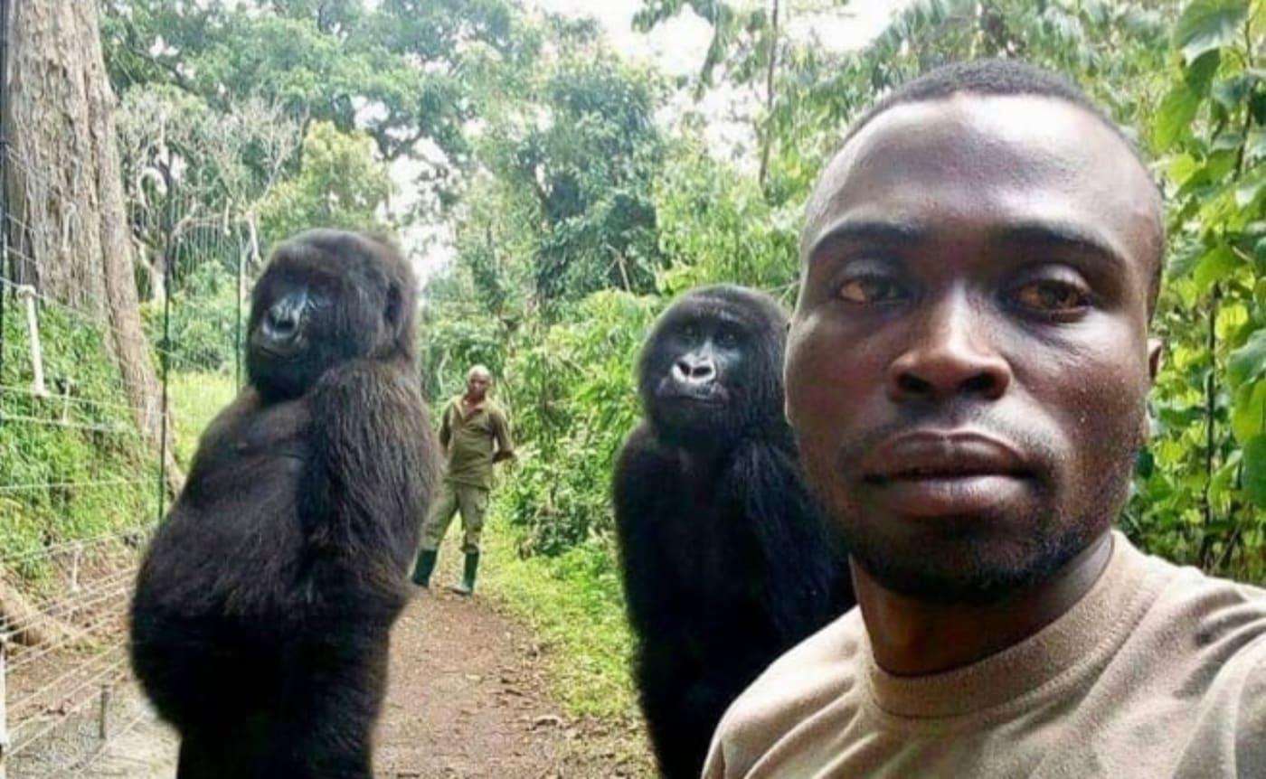 viral gorilla dies africa