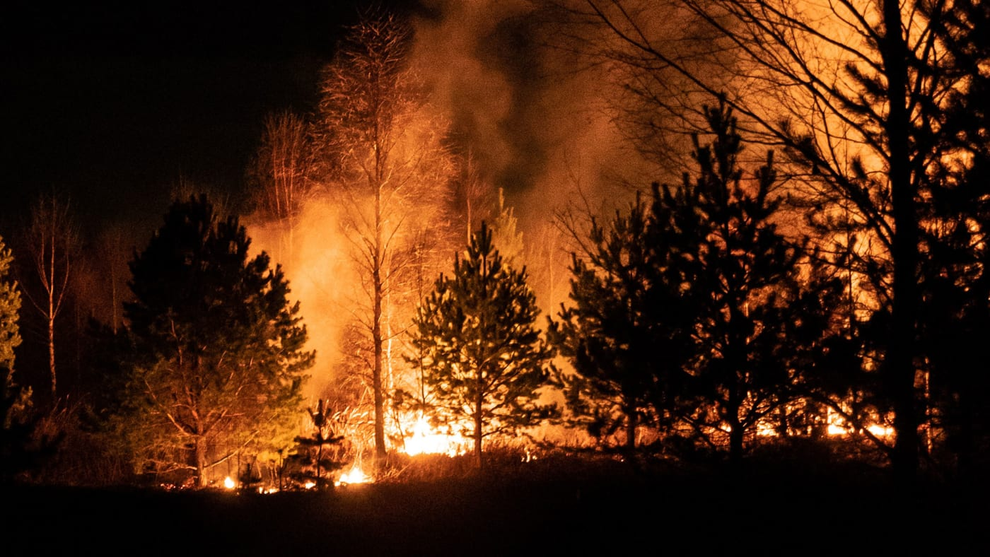 A wildfire burning in a forest