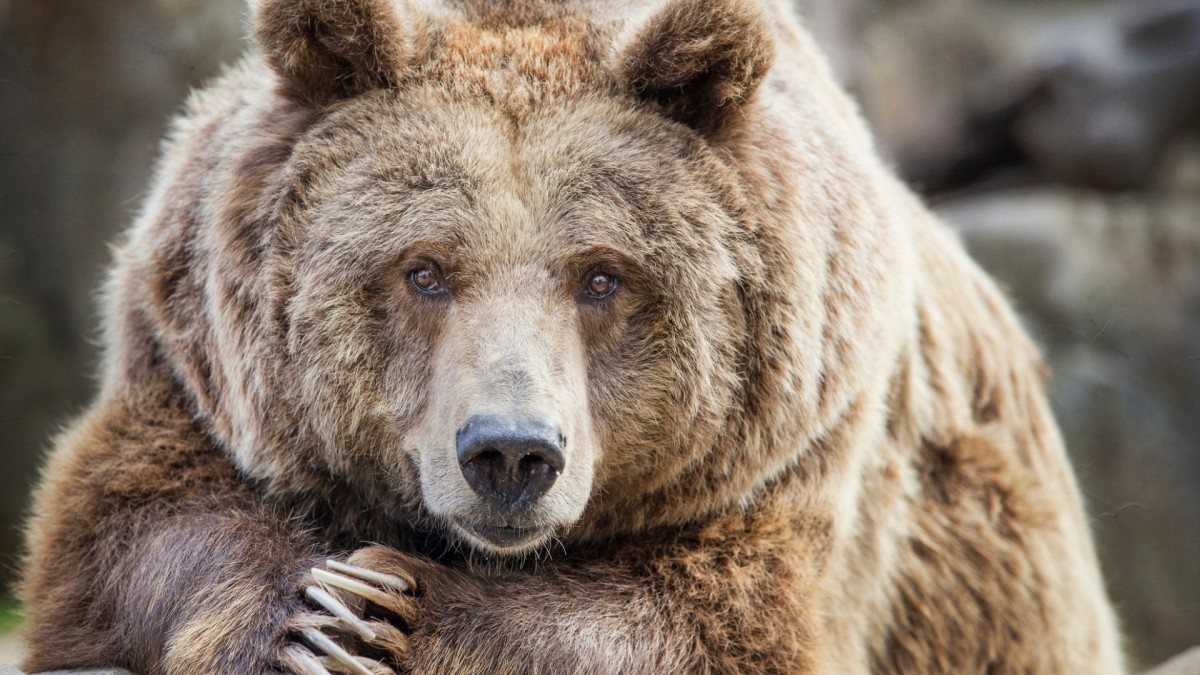 Shanghai Wildlife Park Visitors Witness Employee Being Killed by Bears