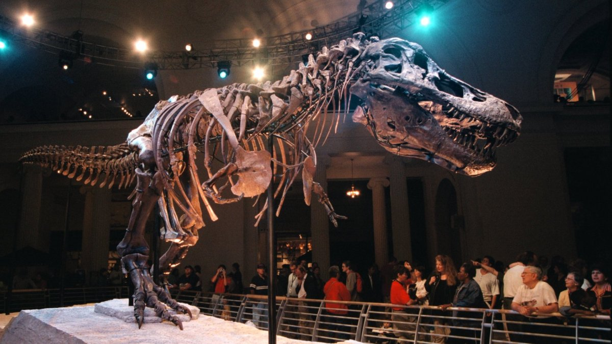 New Dinosaur Discovered in Argentina Named 'One Who Causes Fear'