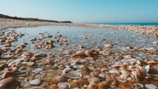 clams on a seashore
