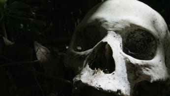 A skull is seen at a village cemetery in Kuban.