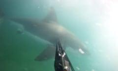 Shark attack caught on GoPro
