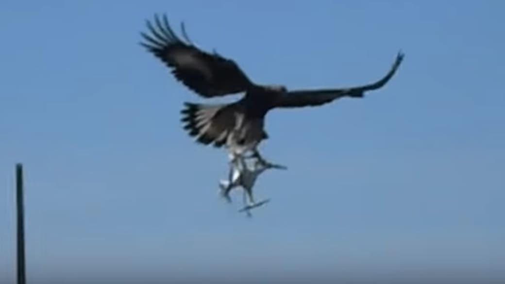 Eagle attacking a drone