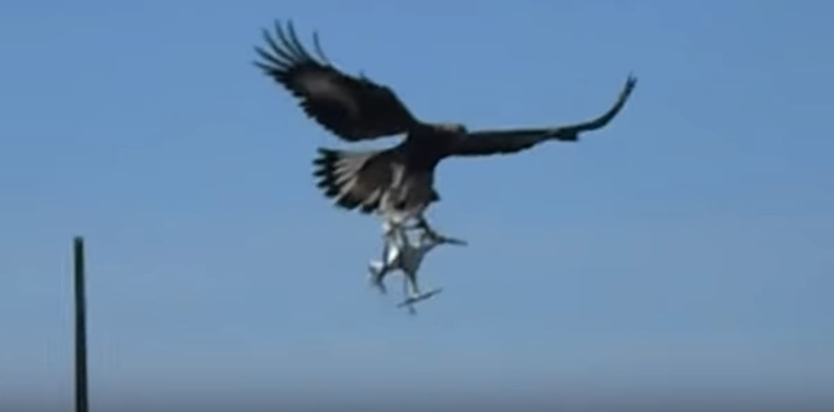 Lee Auto Mall >> French Officials Are Now Teaching Eagles to Take Out ...