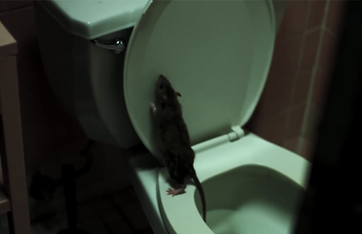 This \'Rats\' Documentary Trailer Is Really a Horror Film | Complex