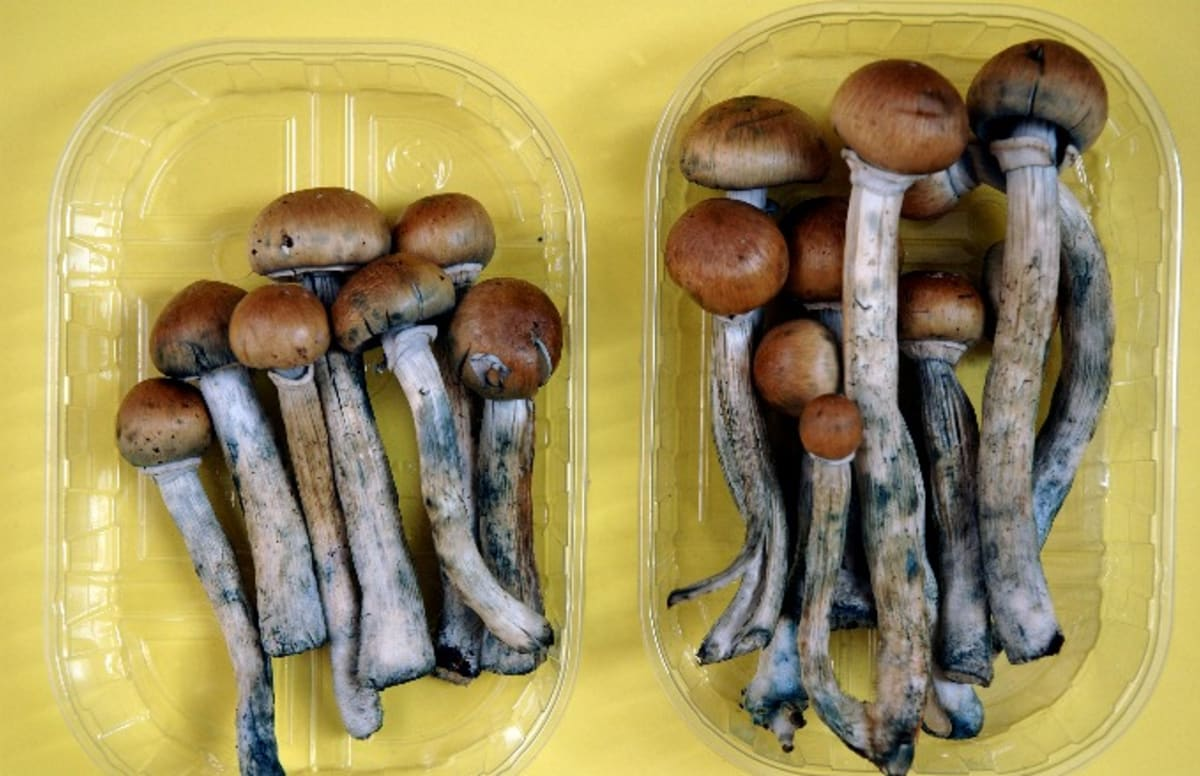 Psychoactive Mushrooms May Get a Legalization Vote in Oregon in 2020