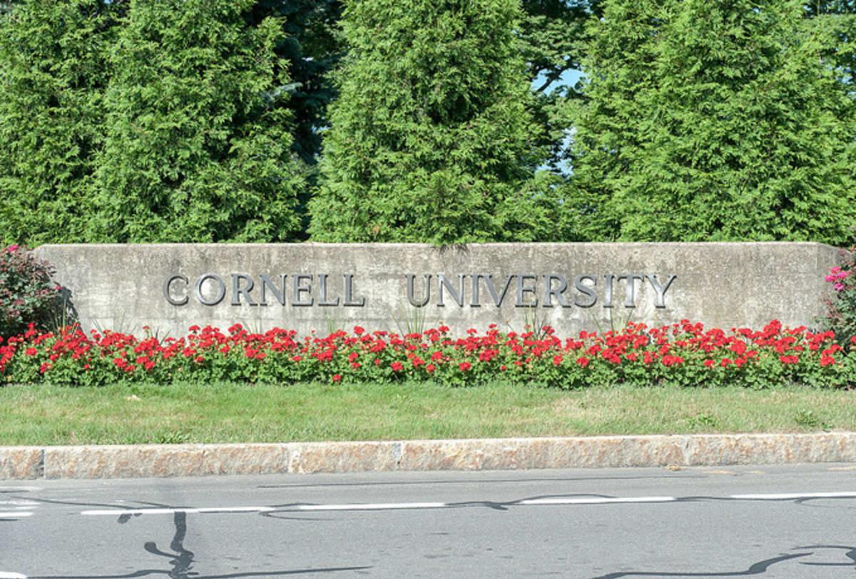 Cornell university student presents thesis in bra underwear 3