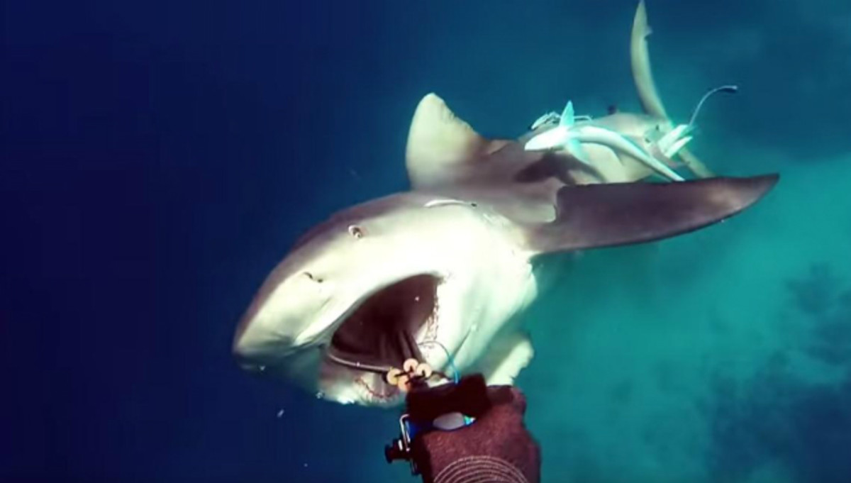 Frightening Video Captures the Exact Moment Bull Shark Attacks Fisherman