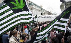 white house marijuana rally