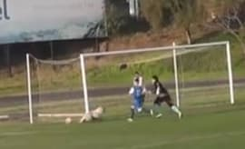 A dog in Chile gets hit with a soccer ball.