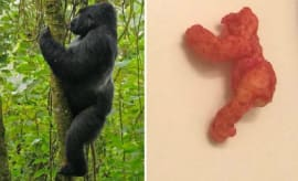 This Harambe-shaped Cheeto sold for a lot of money on eBay.