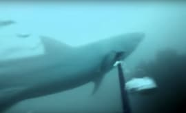 gopro-shark-footage