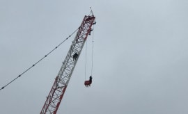 Toronto Woman Rescued From Sky-High Crane Faces Mischief Charge