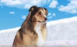 Screenshot from 'Best Friend in Heaven' trailer.